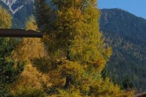 Herbst in Seefeld